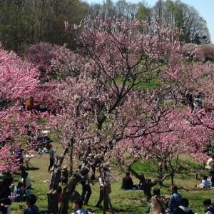 札幌のイベント情報!子供とお出かけ|2017年4月