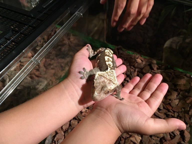サワレルハチュウルイ展 札幌でヘビの首巻きしてきた感想!良い経験したね