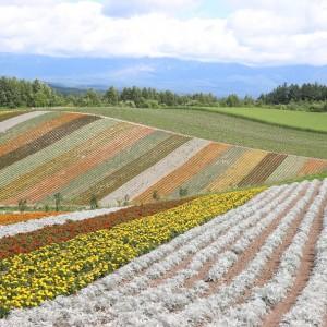 美瑛町 四季彩の丘は子連れにおすすめ!バギー・ノロッコ号・アルパカ牧場が面白い