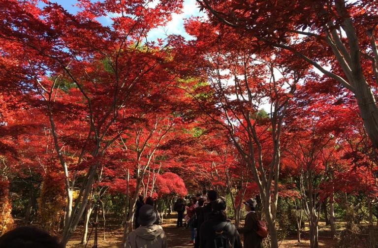 平岡樹芸センターの紅葉は見頃に行くべき!想像以上の光景が待ってるぞ!