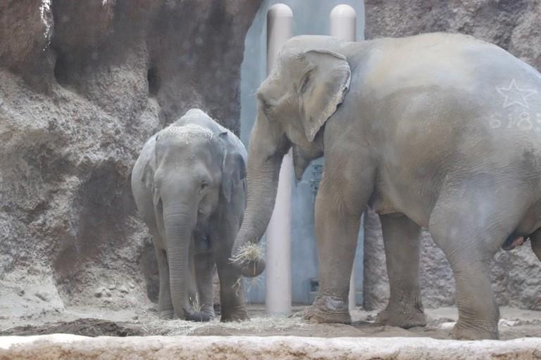 円山動物園ゾウ舎へ行こう!混雑してても見学しやすい施設