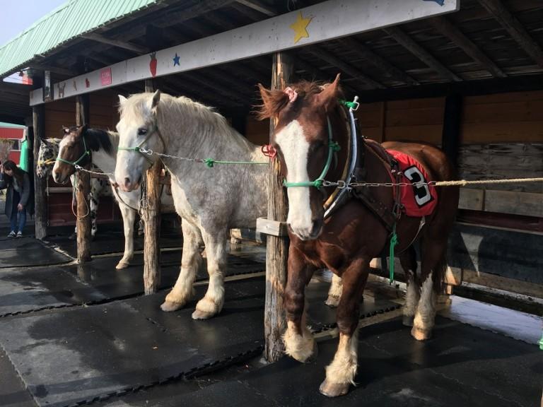 アースドリーム角山農場で動物とふれあう!ばん馬そり体験や木登りも!