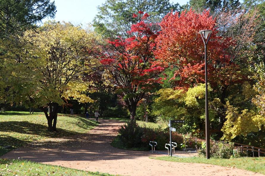 月寒公園 紅葉