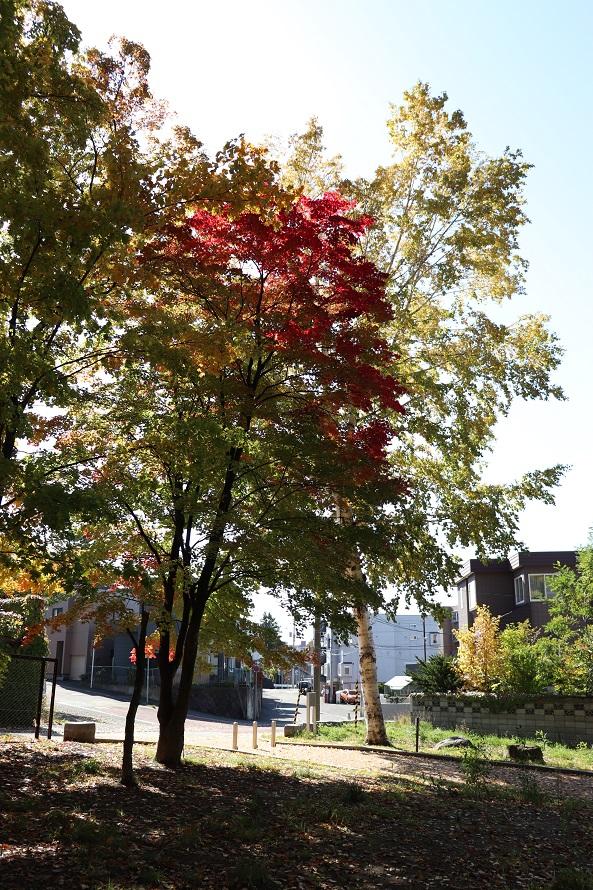 月寒公園の紅葉