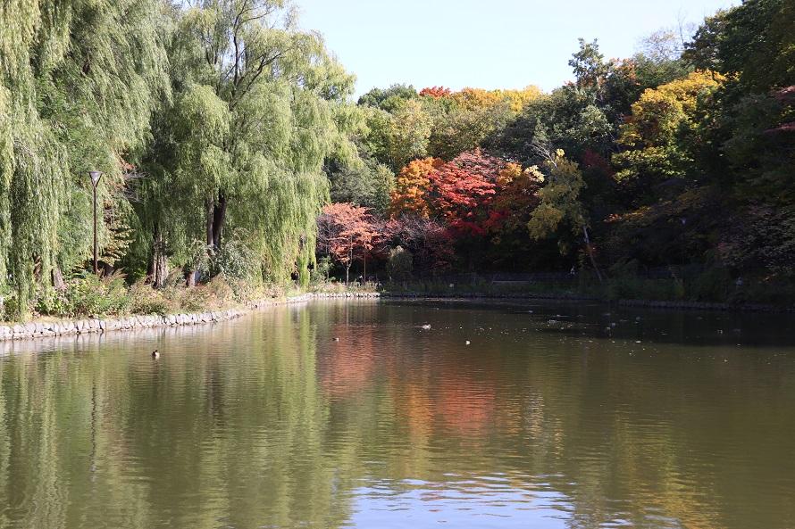 月寒公園の池と紅葉